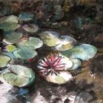 Waterlilly in the pond.