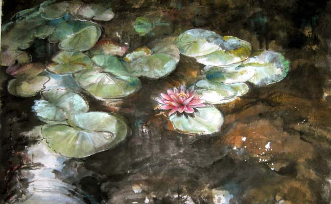 Waterlily reflections on the lily pond