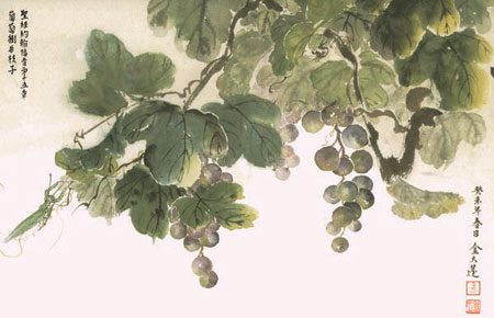 Grapes hanging from the vine.