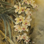 Wild orchid blossoms