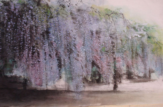 A grove of Wisteria creates a purple lacy curtain of blossoms